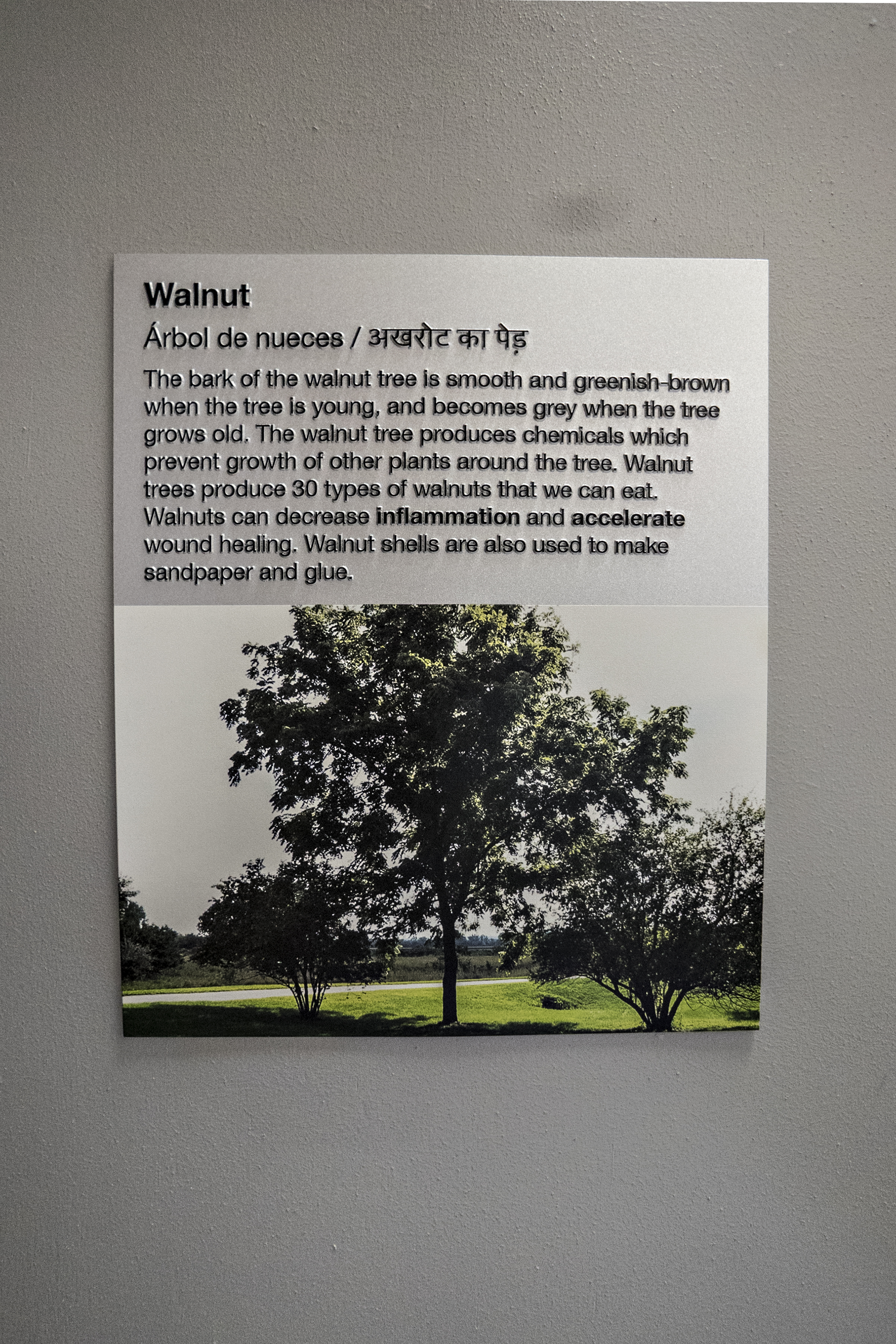 Located at the entrance to each classroom, this sign talks about the native tree that the classroom was named after.