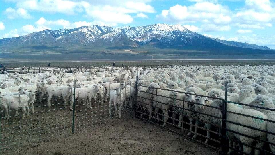 utah wool marketing contact.jpg