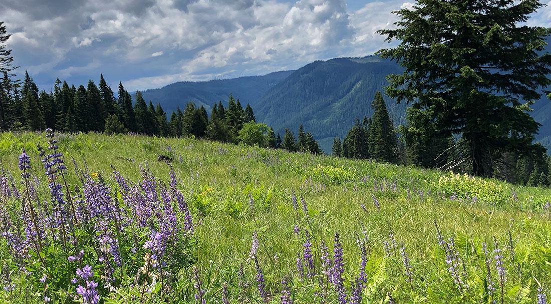 meadow-2.jpg
