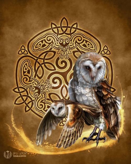 wise-owl-web.jpg