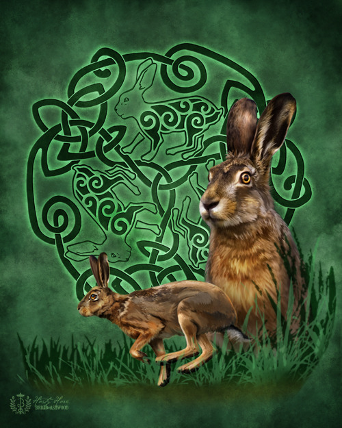 hasty-hare-web.jpg