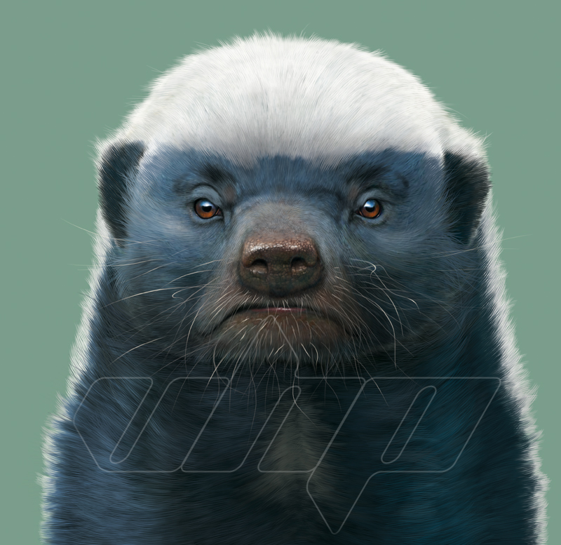 A-030+Honey+Badger+portrait.jpg