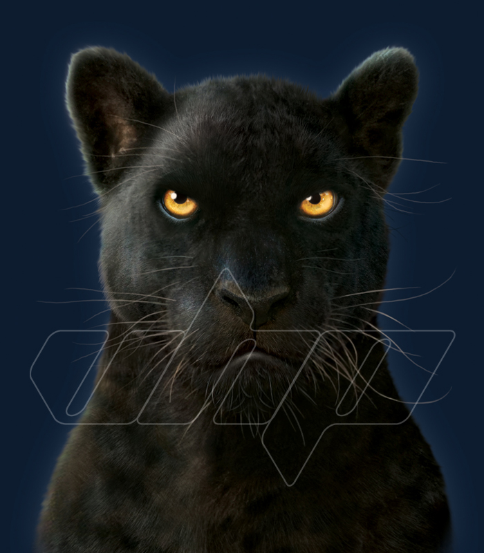 Black+Panther+Portrait.jpg