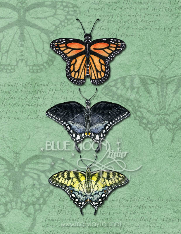 BUTTERFLY TRIPTYCH by MARY LAYTON