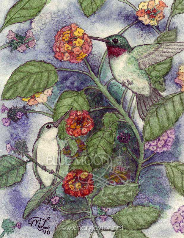RUBY THROATED HUMMINGBIRDS by MARY LAYTON