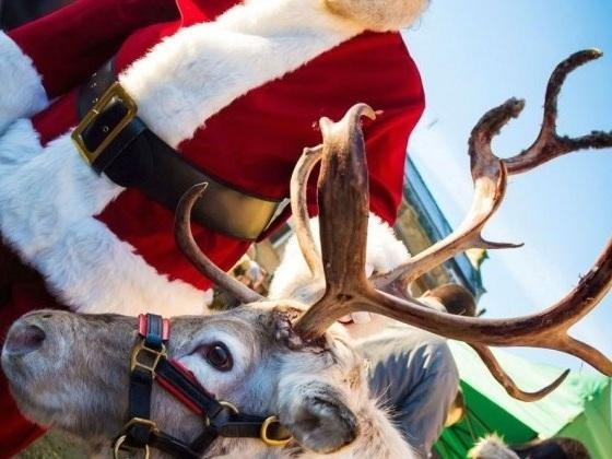reindeer_08-1.720x420.jpg