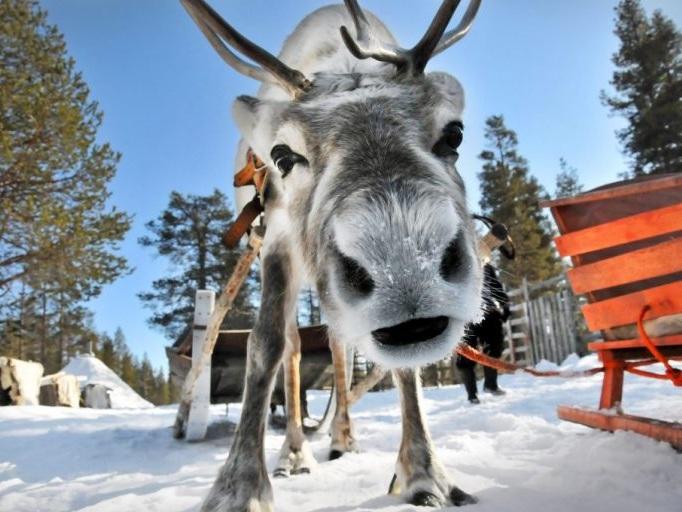 reindeer-safari-1024x680-767x512.jpg