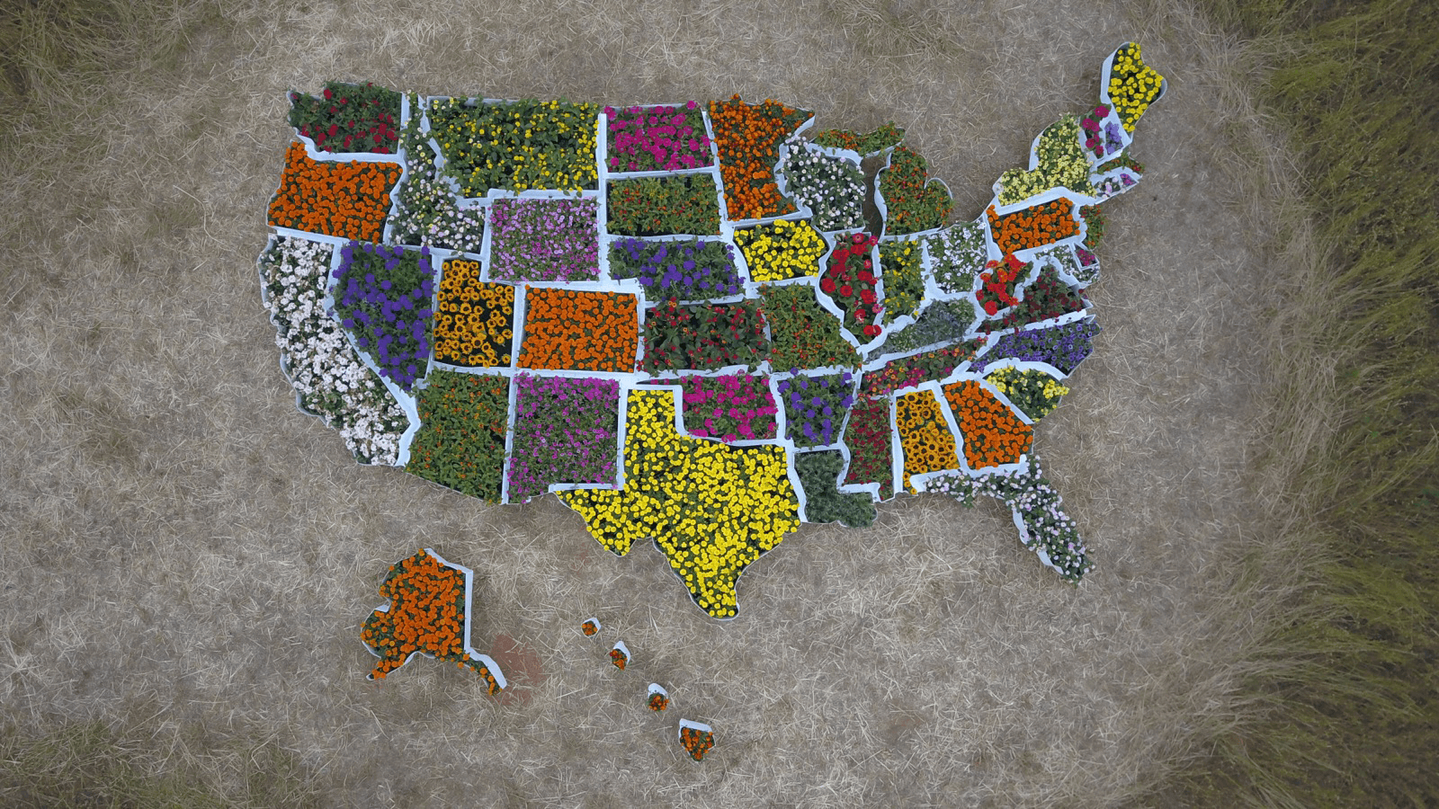 Atlanta Props™ Custom Film Prop - USA Map with Flowers for Save the Bee Initiative