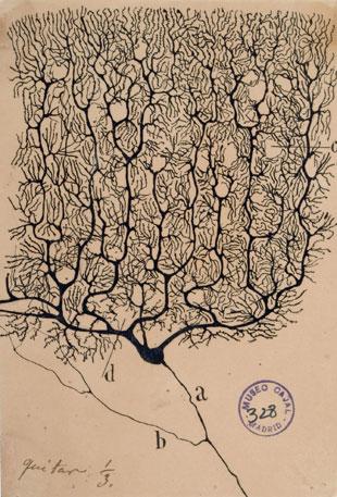 (artist: Santiago Ramón y Cajal)