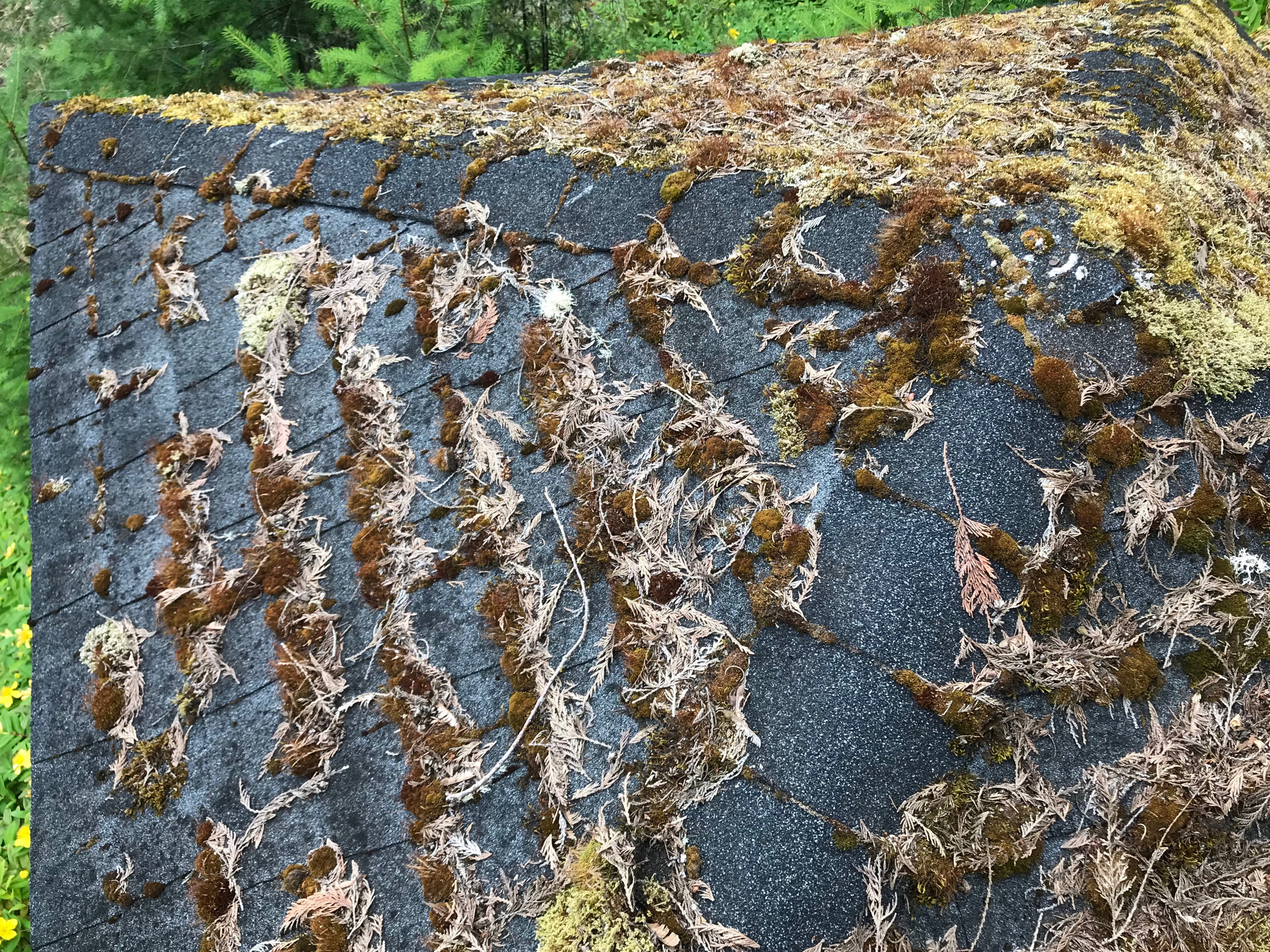 Top Rated Roof Moss Removal In Seattle