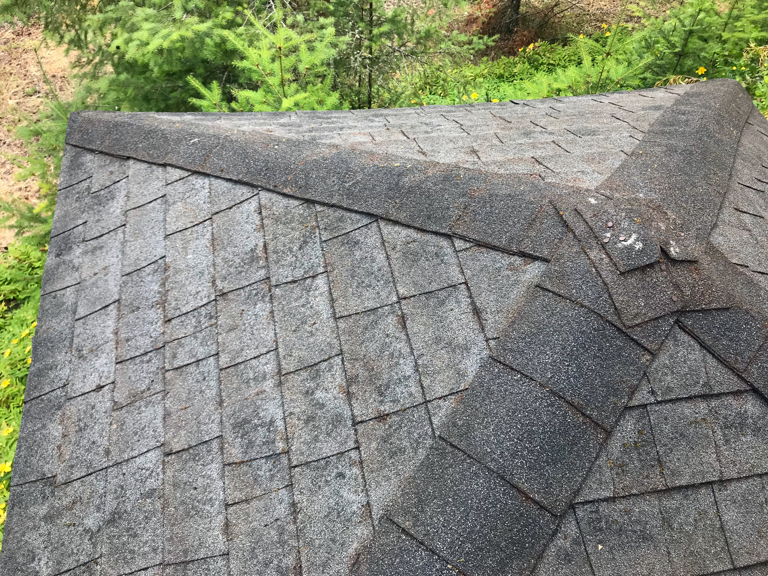 Roof Moss Removal Near Me Redmond