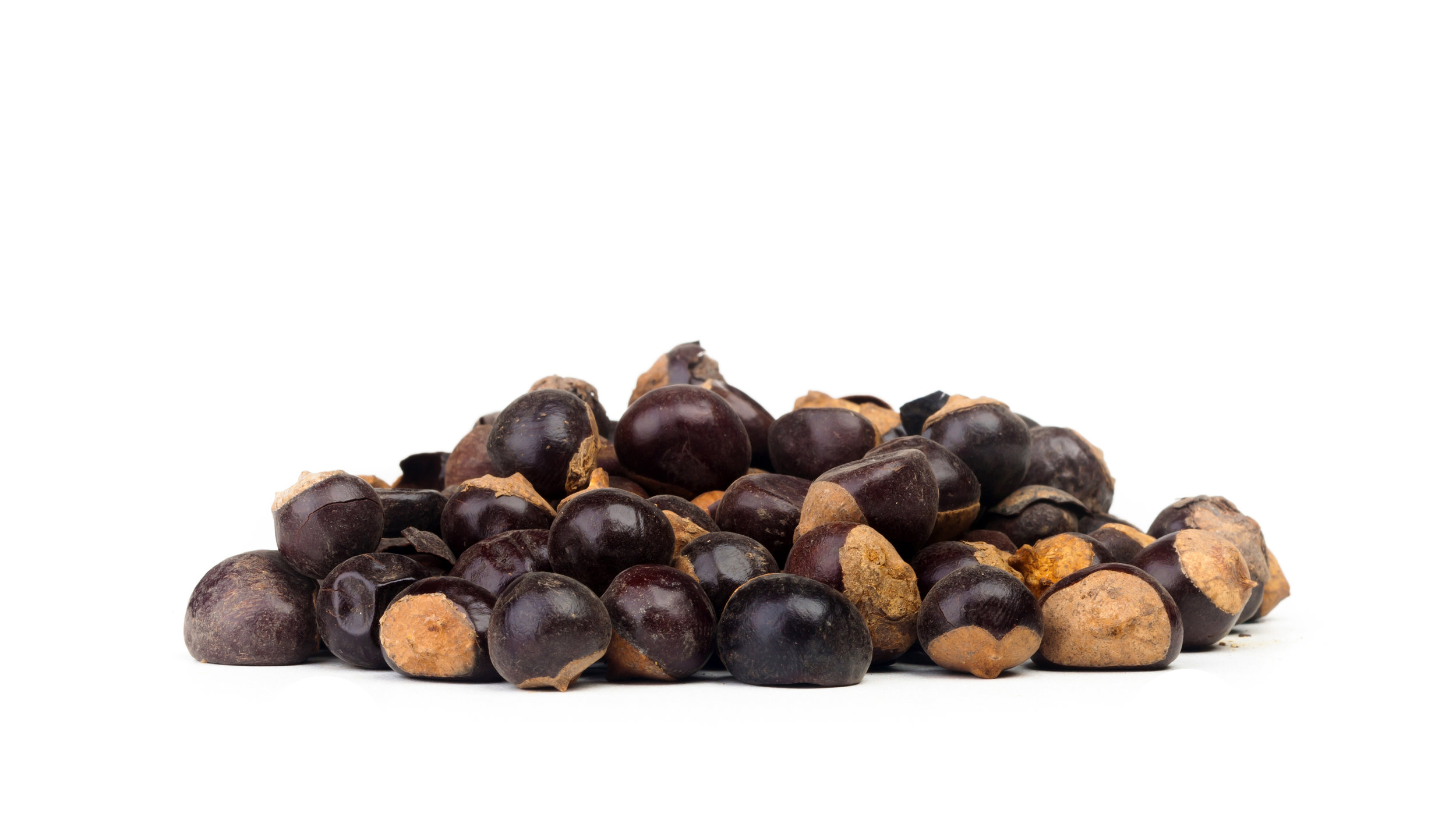 Guarana seeds.jpg
