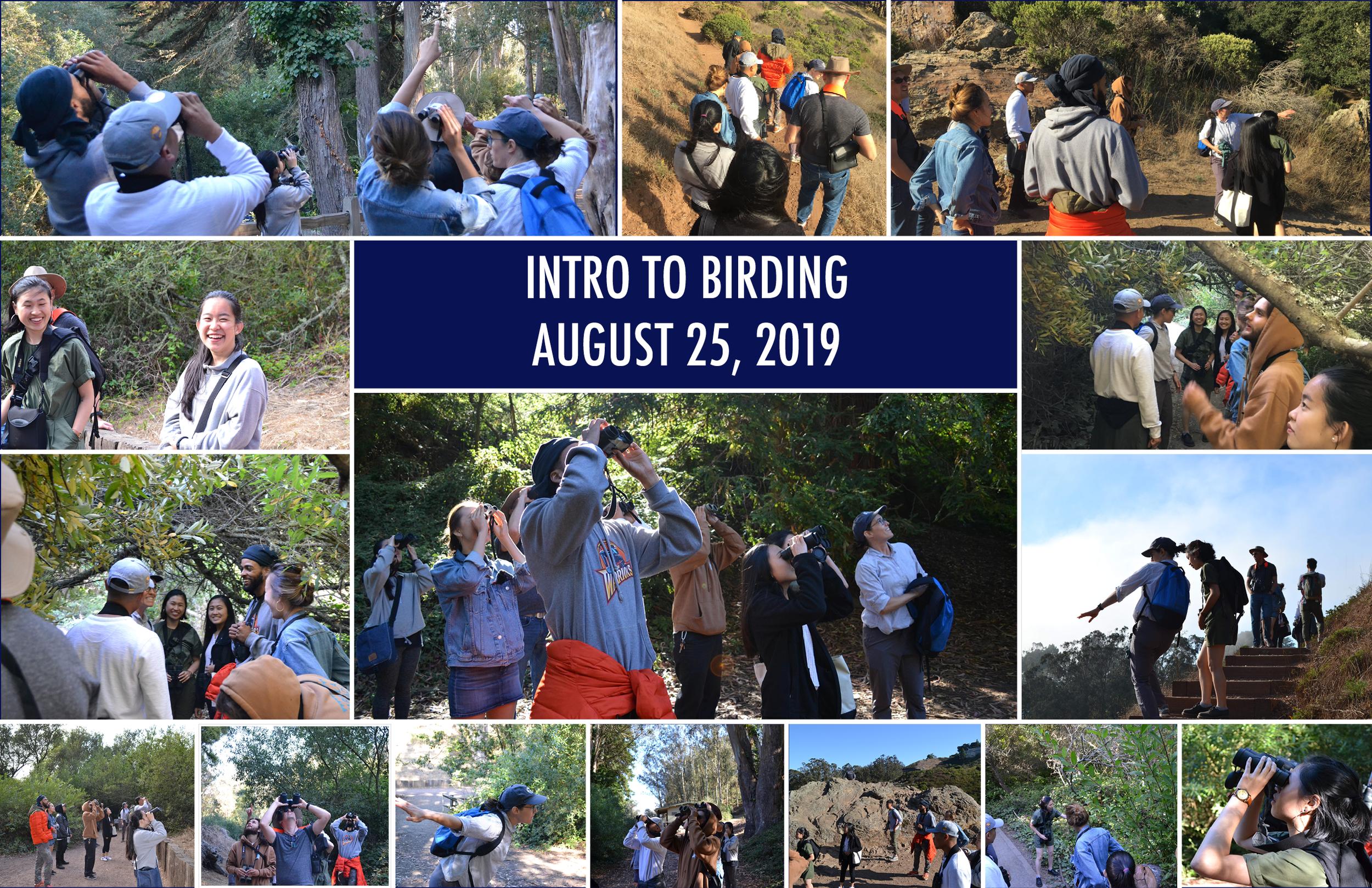 Birding Collage.png