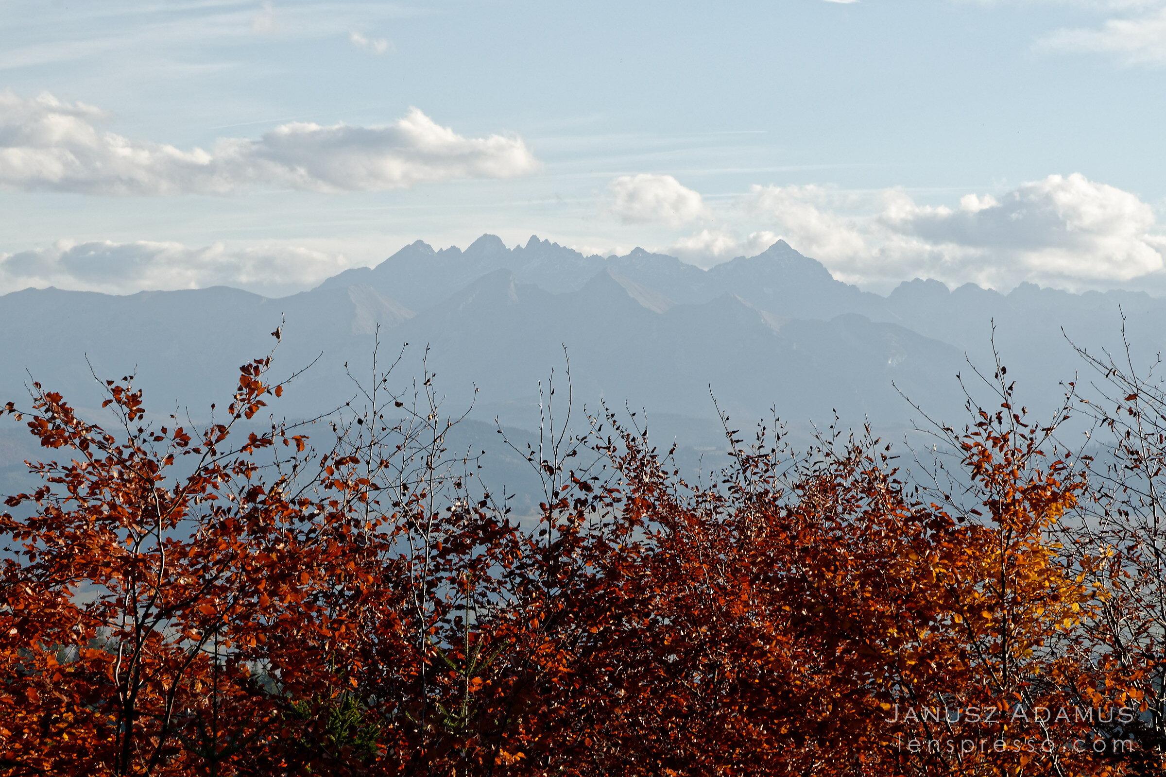 Tatras over red beech trees