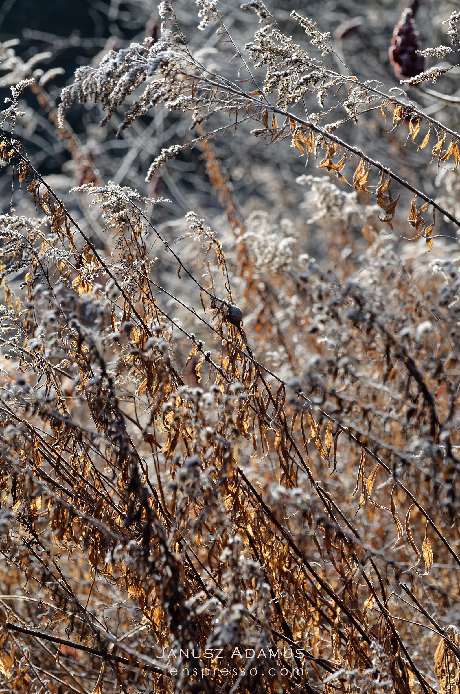 Frosty abstract