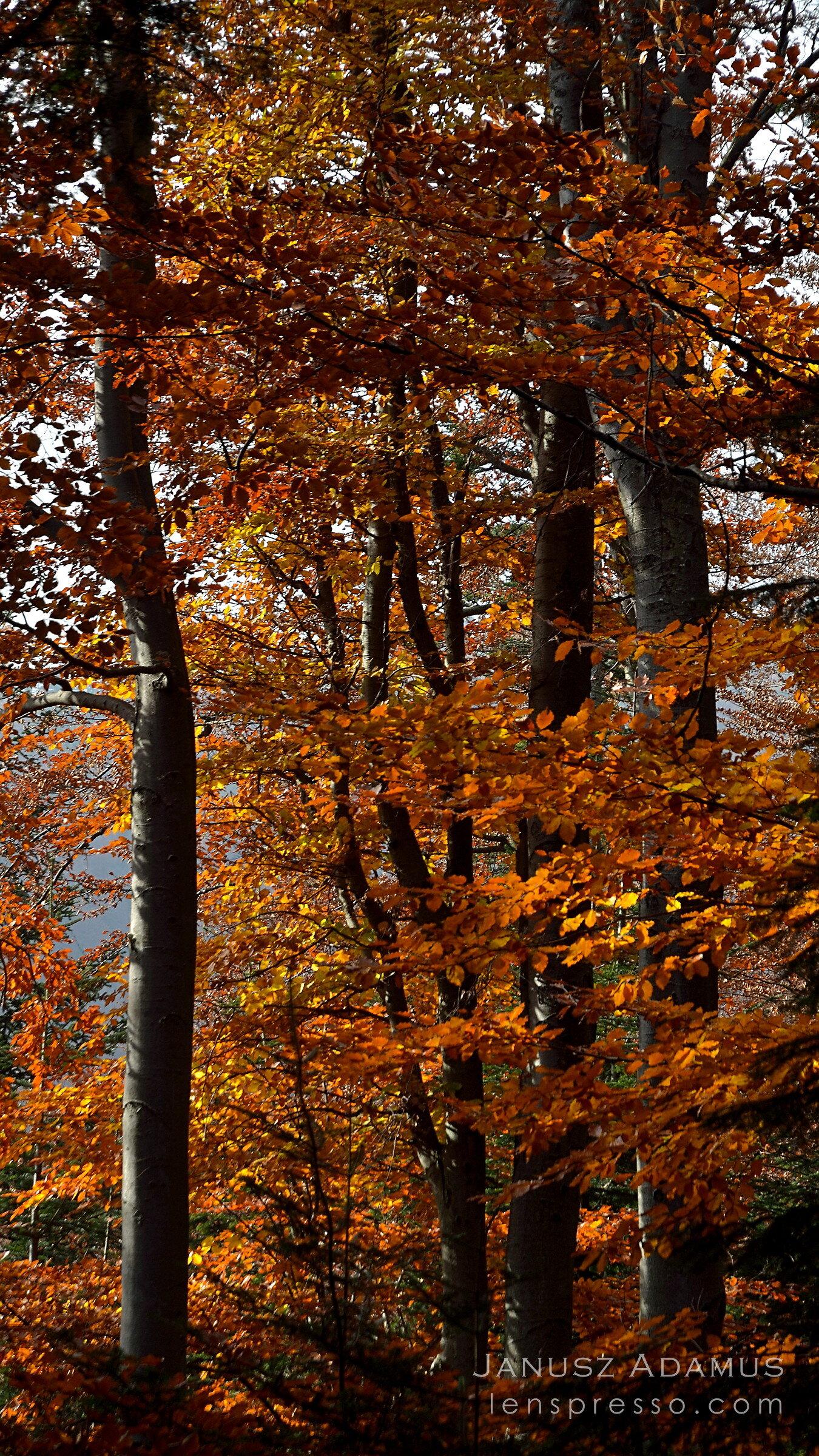 October beech forest