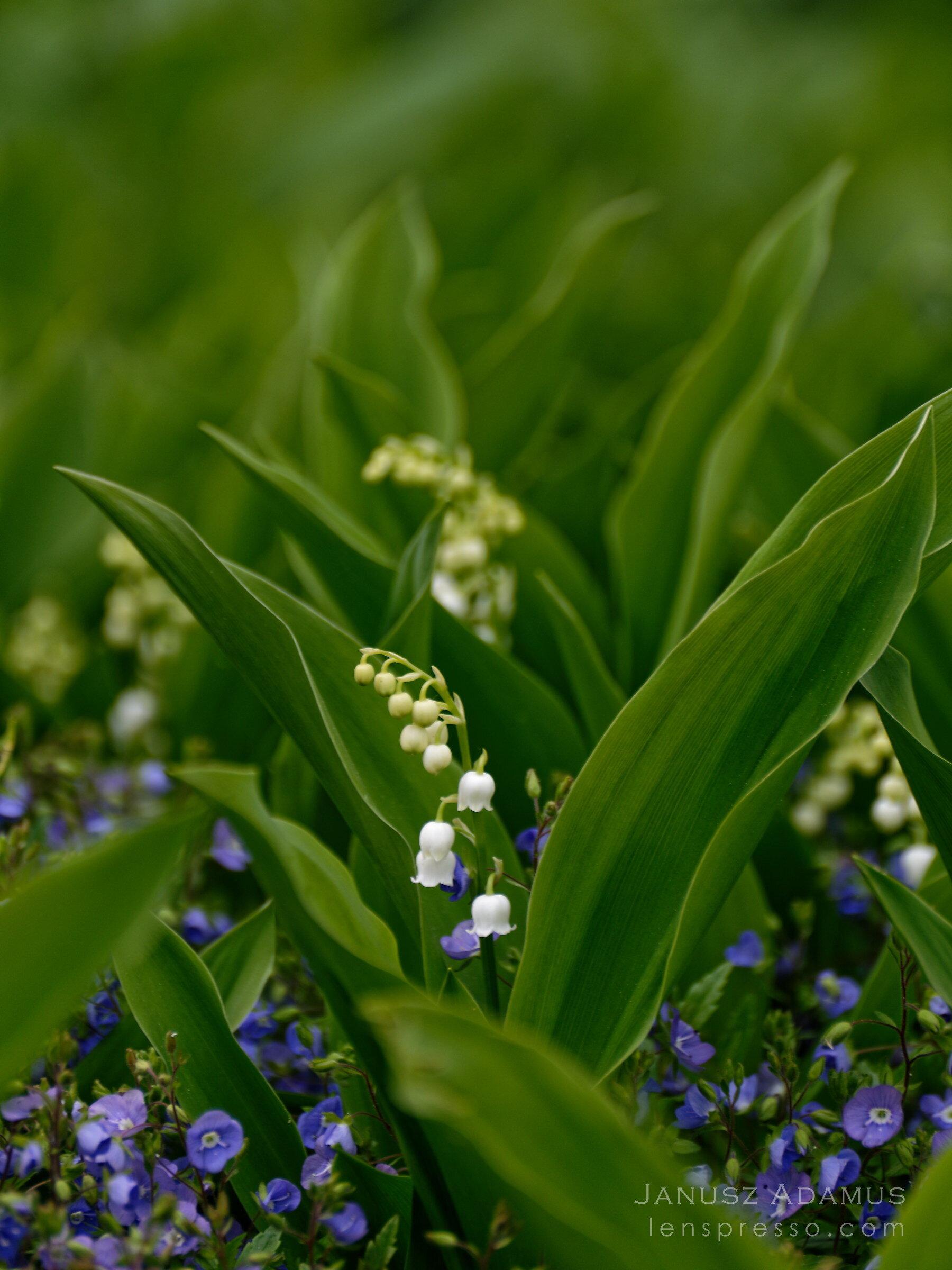 In a spring garden