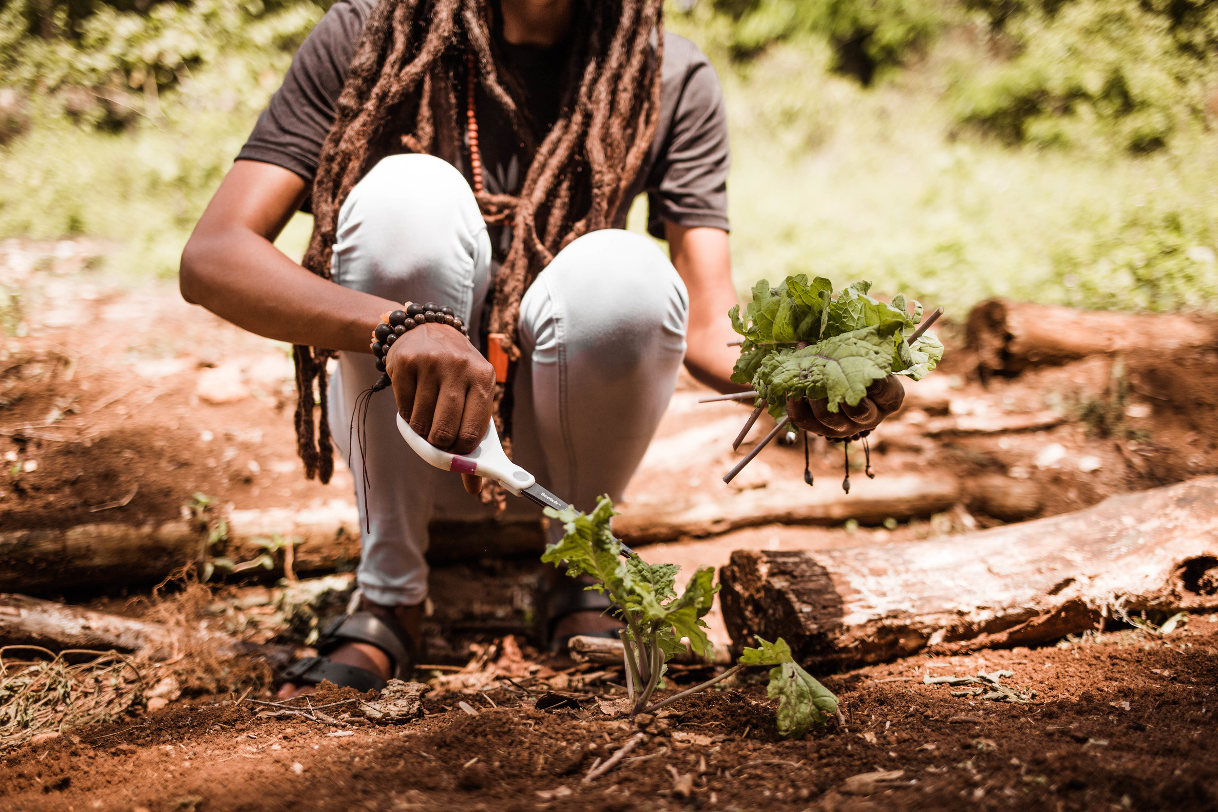 Grow - Experience the preservation and growth of our natural being by engaging with nature in its most untouched form. Tour the ecological garden and kitchen