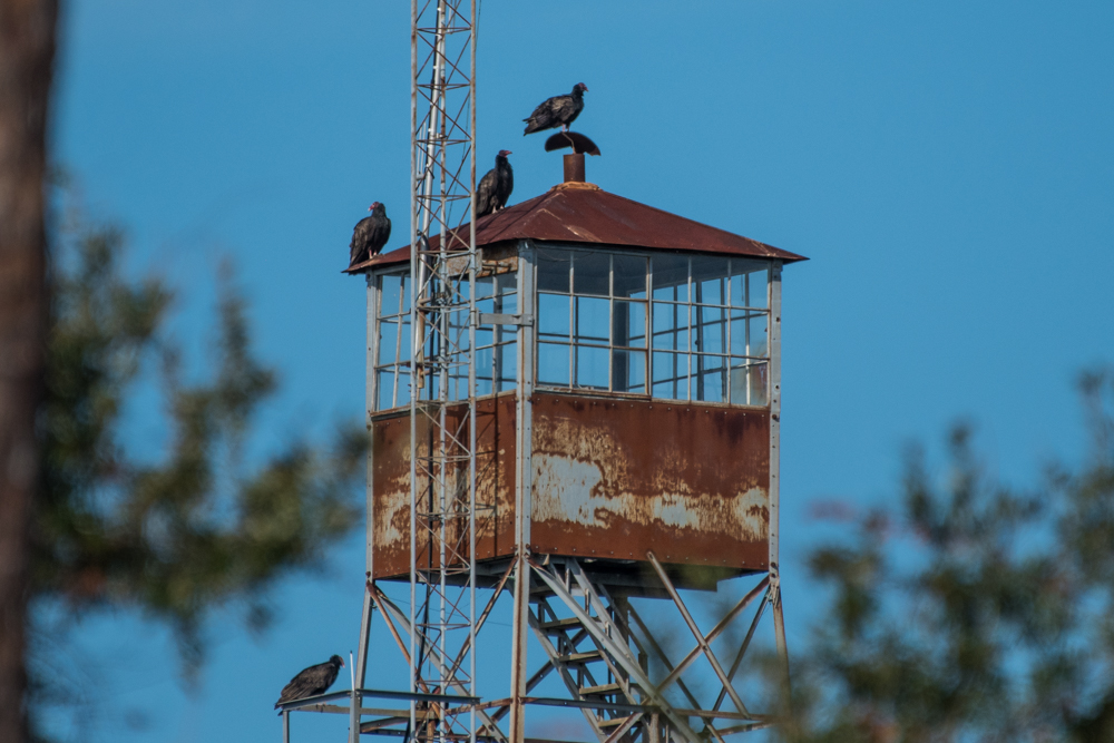 Vultures on the Firetower