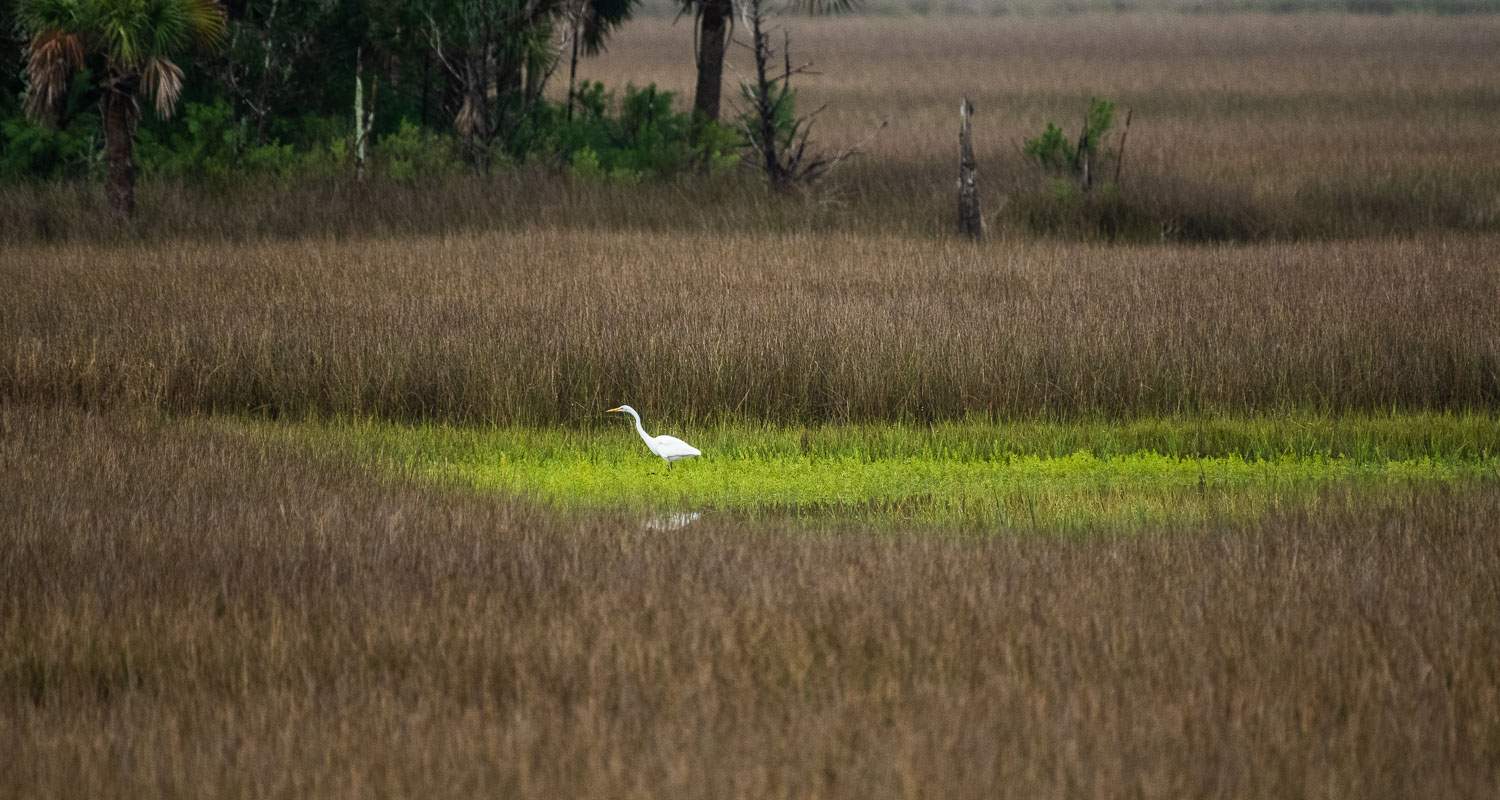 Great Egret - low res.jpg