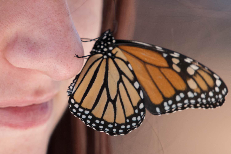 Monarch5.jpg