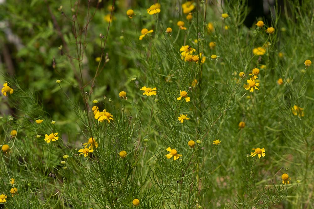 Levee Trail4.jpg