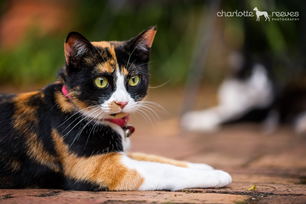Poppy-Jazz-Cats-Brisbane-13.jpg