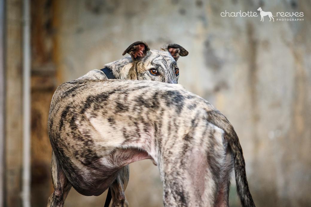 Ziggy-Greyhound-Brisbane-01.jpg