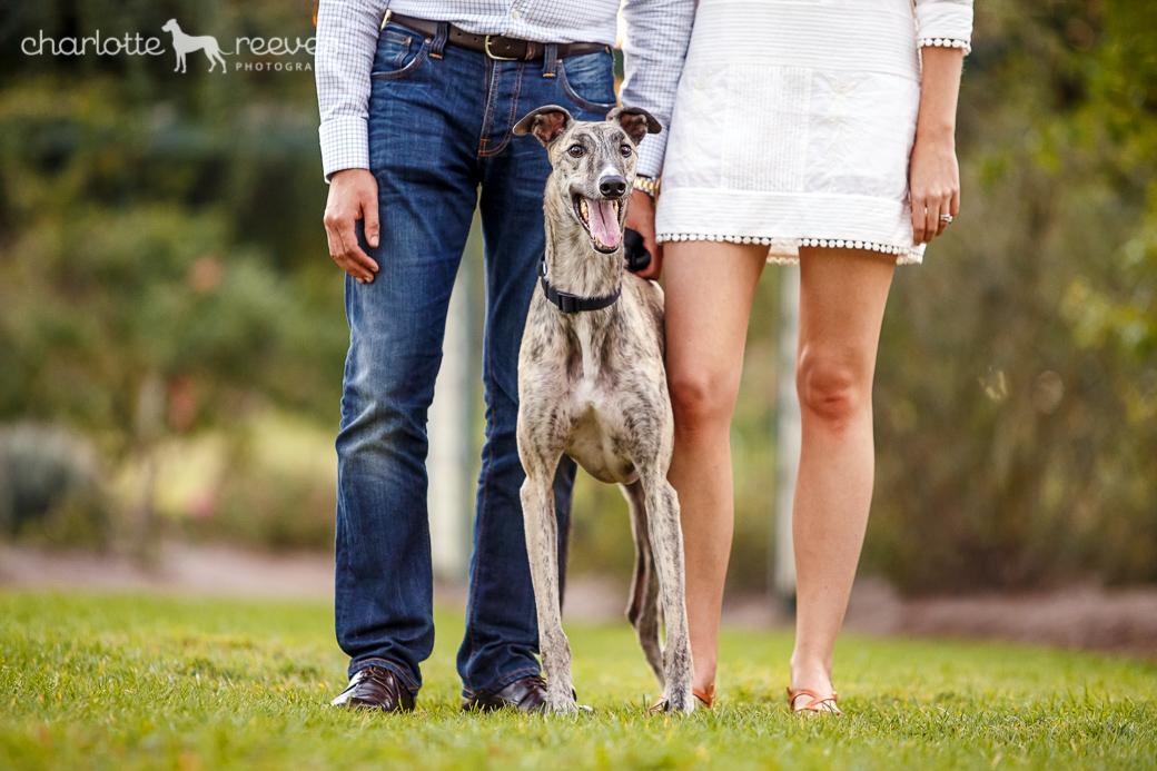 Ziggy-Greyhound-Brisbane-05.jpg