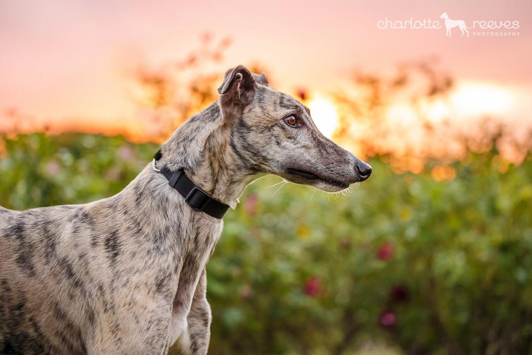 Ziggy-Greyhound-Brisbane-07.jpg