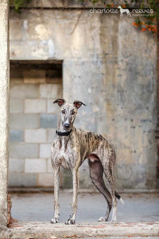 Ziggy-Greyhound-Brisbane-09.jpg