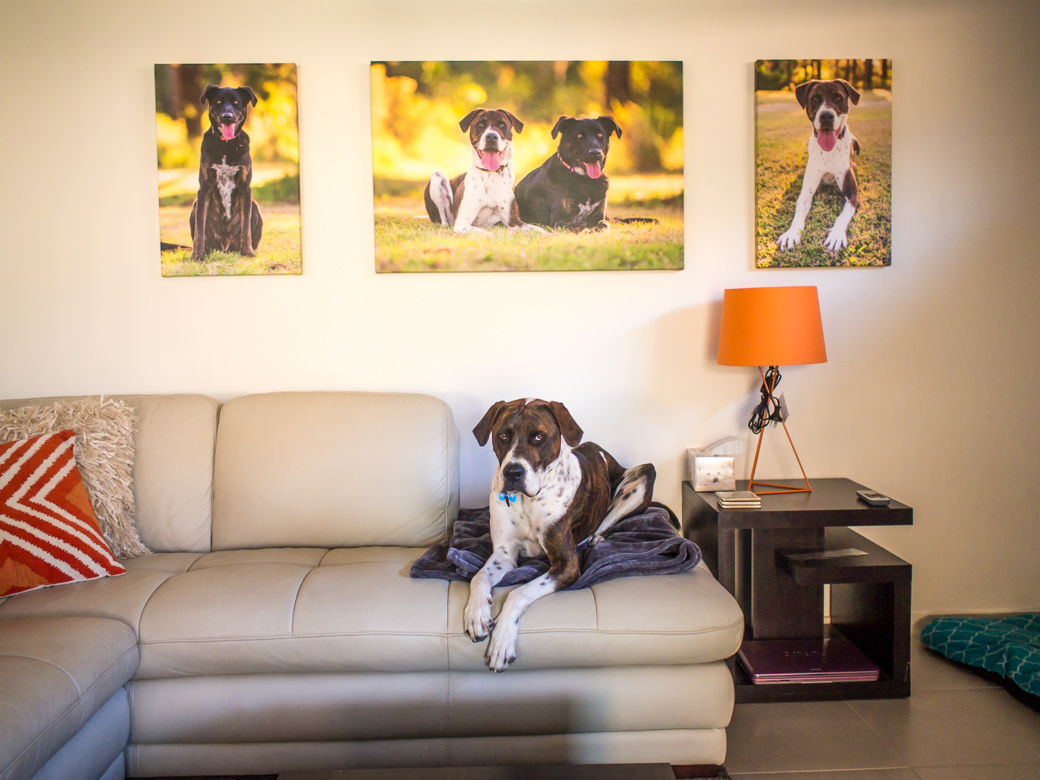 Dog art on your wall? Awesome. Your own dog as art on your wall? Priceless!