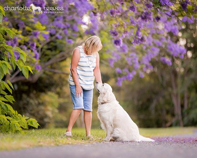 Capturing the devotion between dogs and their owners is part of my job that I adore. That loving look, that sly kiss, that sneaky tongue-in-the-mouth 👅💋😆⁠ ⁠ Just a nice sedate loving look here though between Cloud and her mum, underneath the flowering Jacarandas last year. 🌸 Can't wait til spring rolls around, in just a few months! 🎉⁠ ⁠ #jacarandas #jacarandatrees #brisbanejacarandas #jacarandaobsession #dogsandtheirhumans #dogandowner #goldenretriever #goldensofinstagram #goldenretrieverlove #brisbanedogs #dogsofbrisbane #brisbanedogphotography #brisbanepetphotography #brisbanedogphotographer