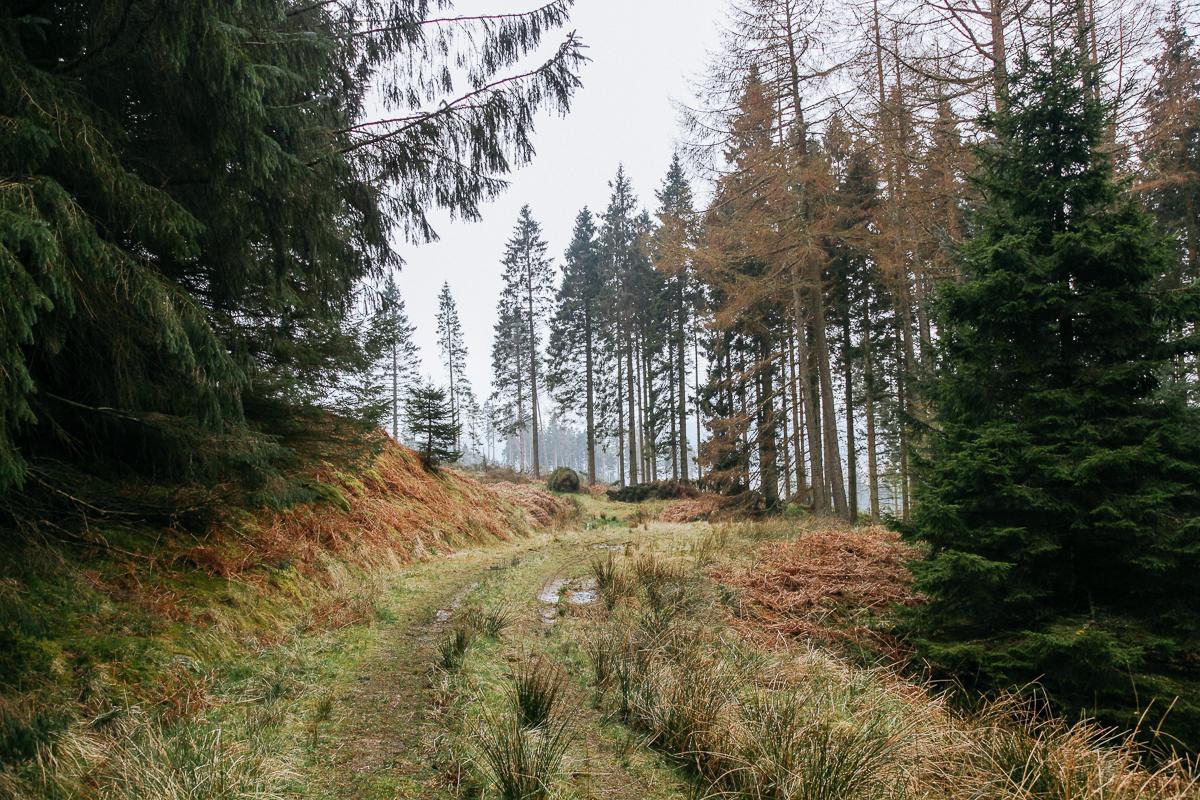 Kielder Forest.jpg
