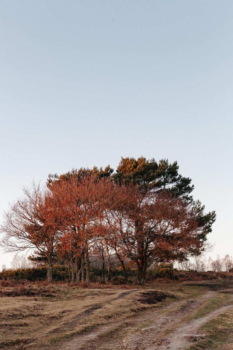 Ashdown Forest Trees 2.jpg
