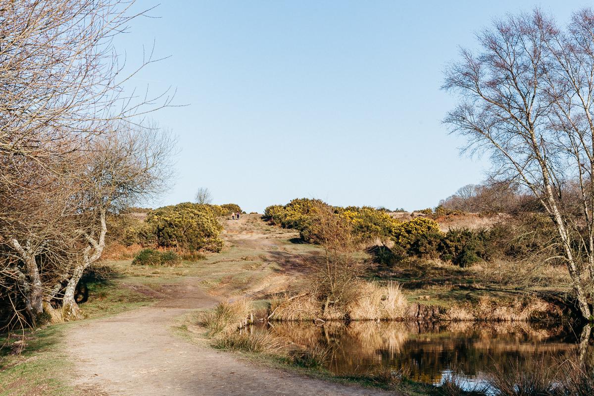Ashdown Forest 2.jpg