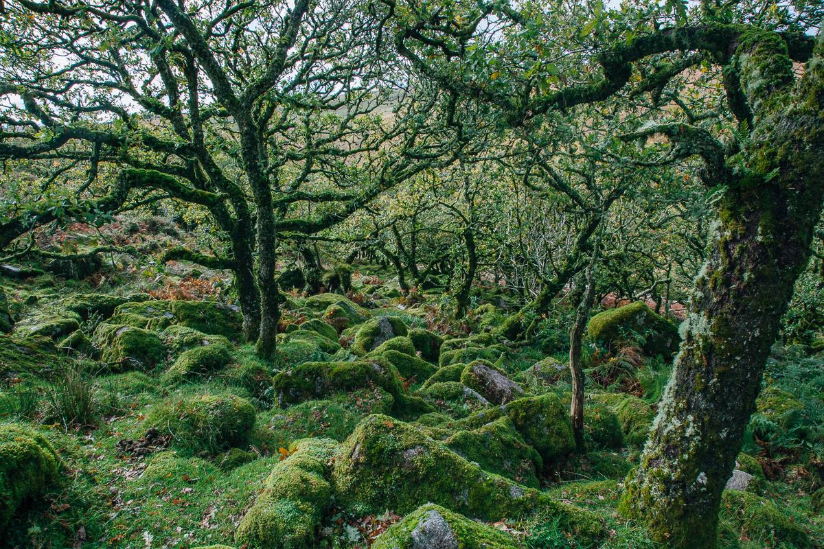Wistmans Wood.jpg