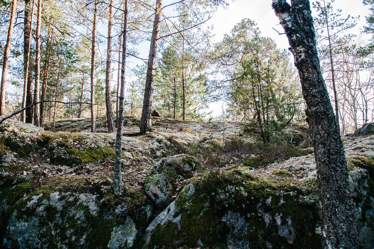 Sweden Forest Rocks.jpg