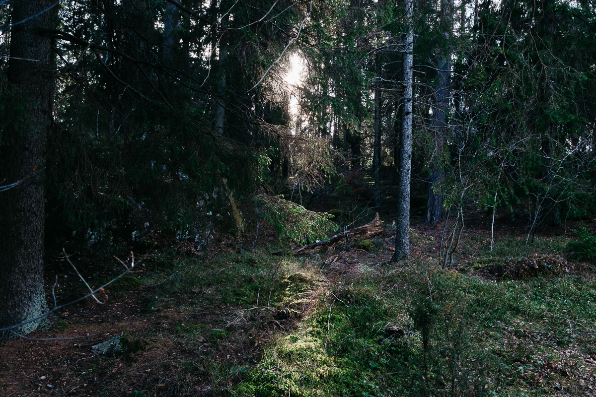 Swedish Forest 2.jpg
