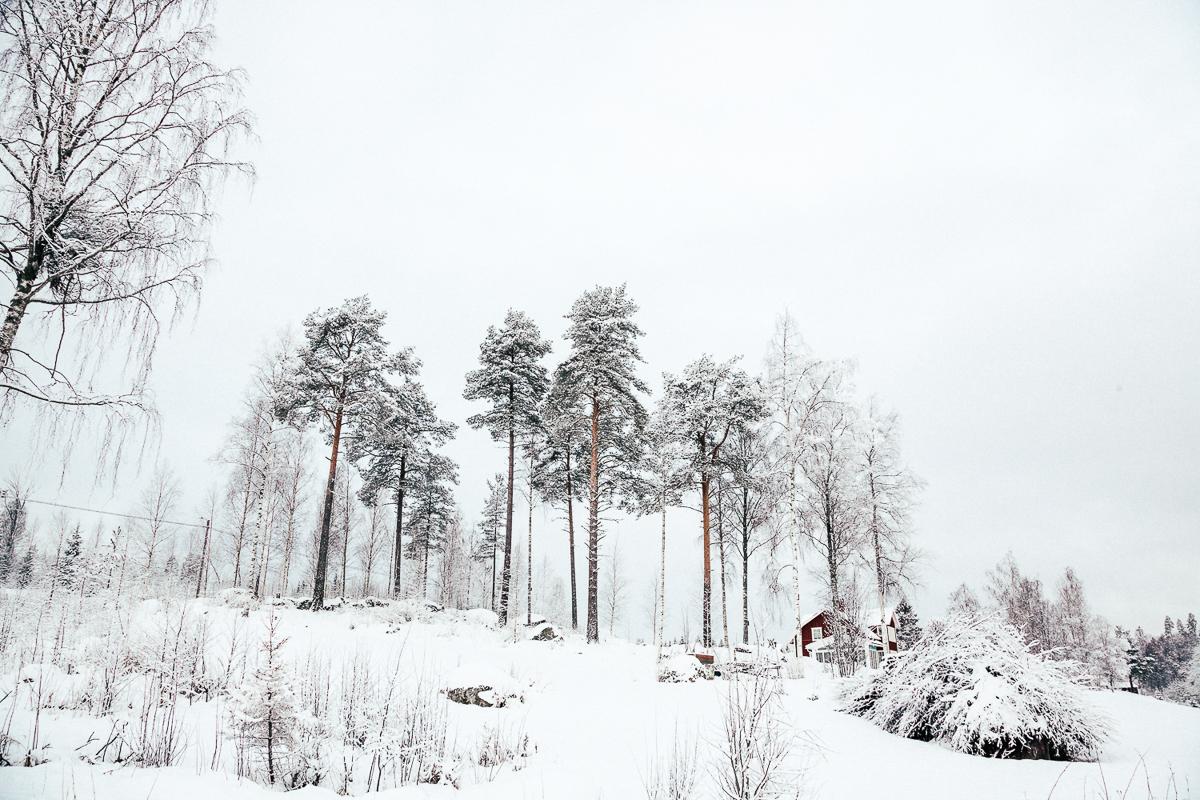 Sweden Snow.jpg