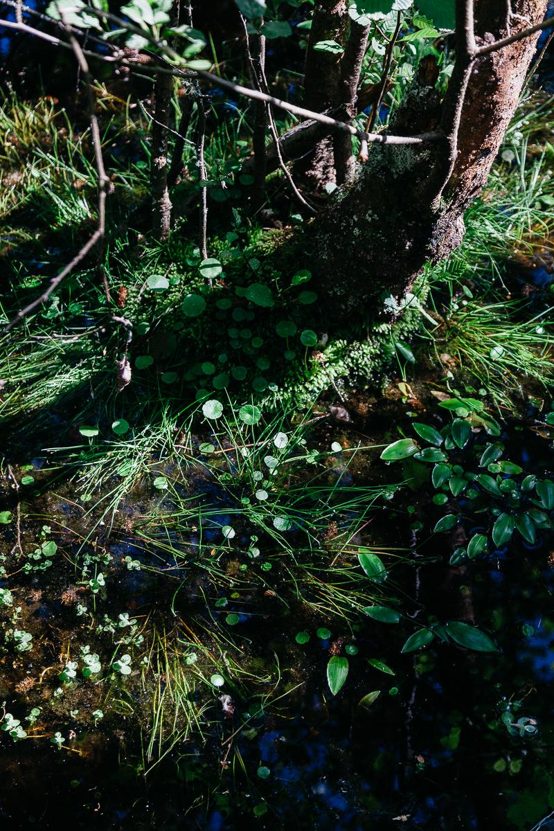 Pond Weed 4.jpg