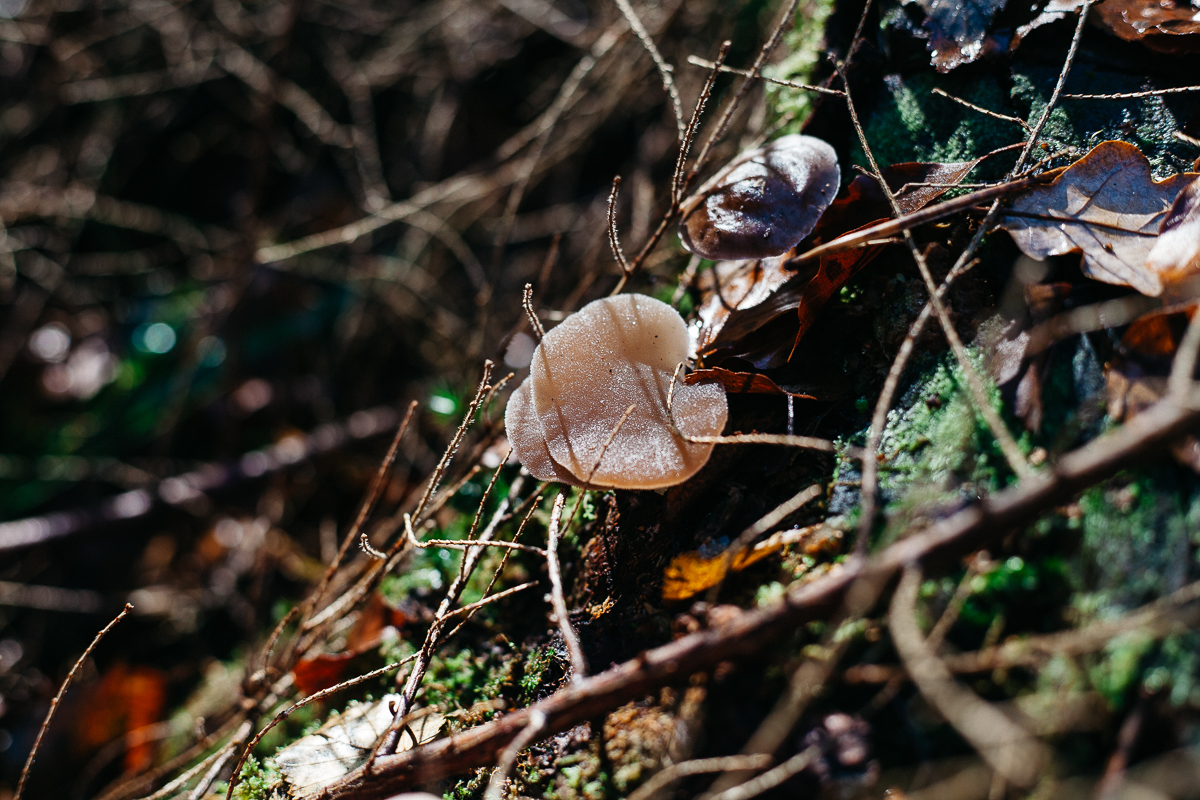 Mushroom Jelly Tooth.jpg