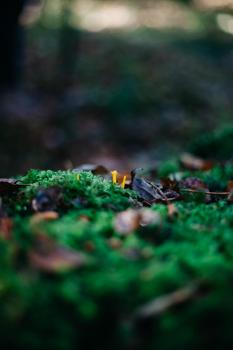 Mushroom New Forest 2.jpg