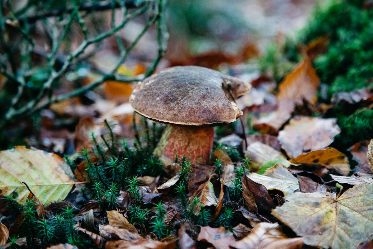 Mushroom New forest.jpg