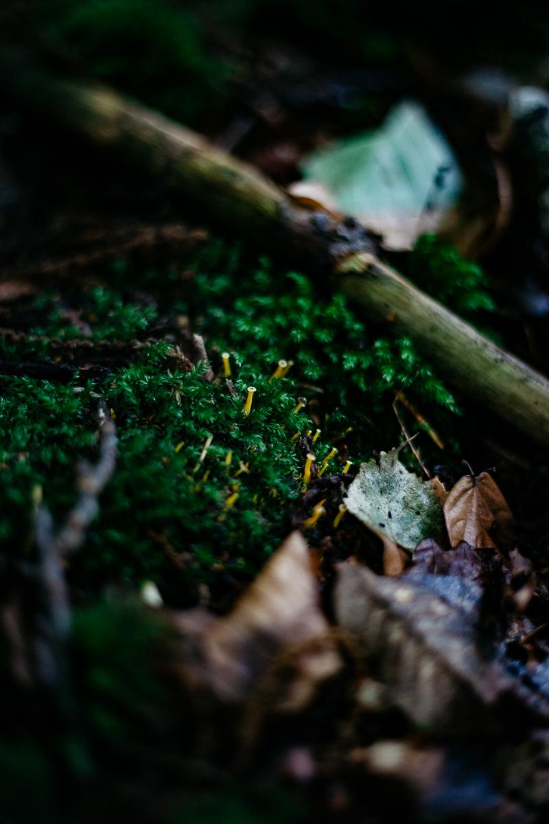 Mushrooms 31.jpg