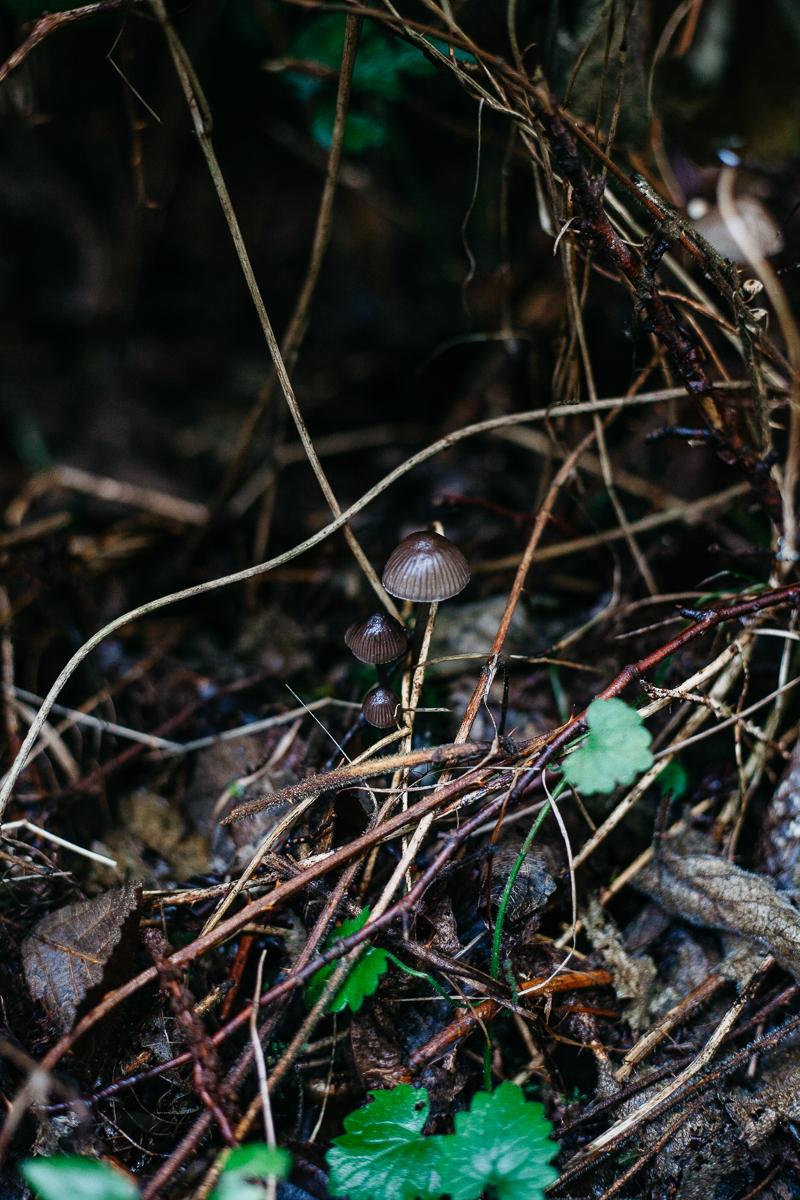 Mushroom 15.jpg