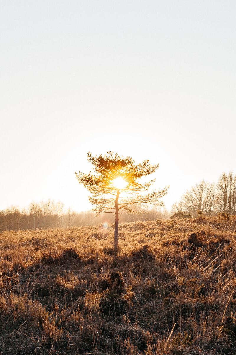 Ashdown Forest Sunset.jpg