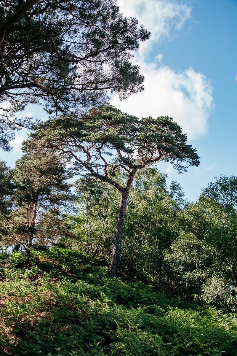 Brownsea Island Arbortum.jpg