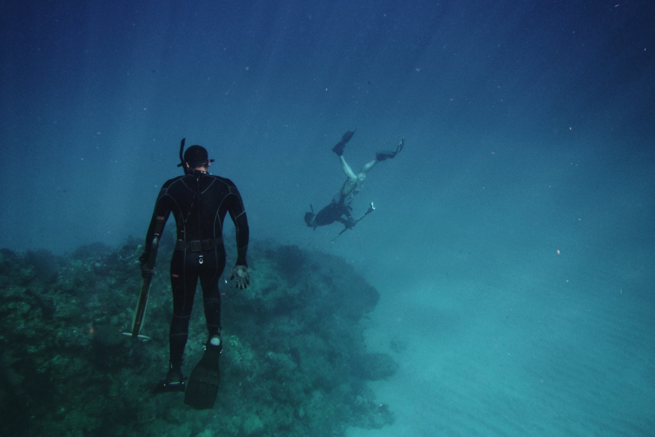 coral+monitoring