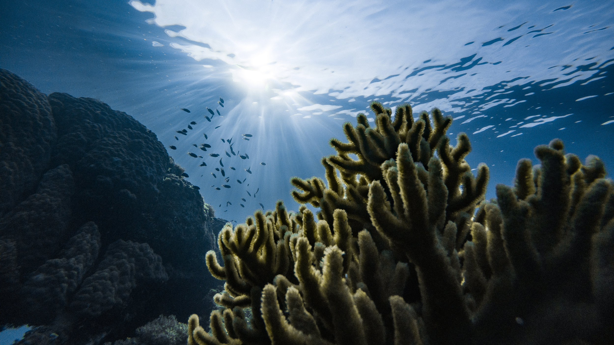 Help protect our coral reefs -